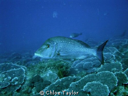 Another dive at the Abrolhos ;) by Chloe Taylor 